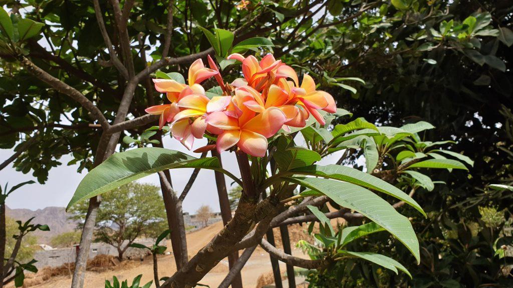 SANTIAGO Botanic Garden - Capverde