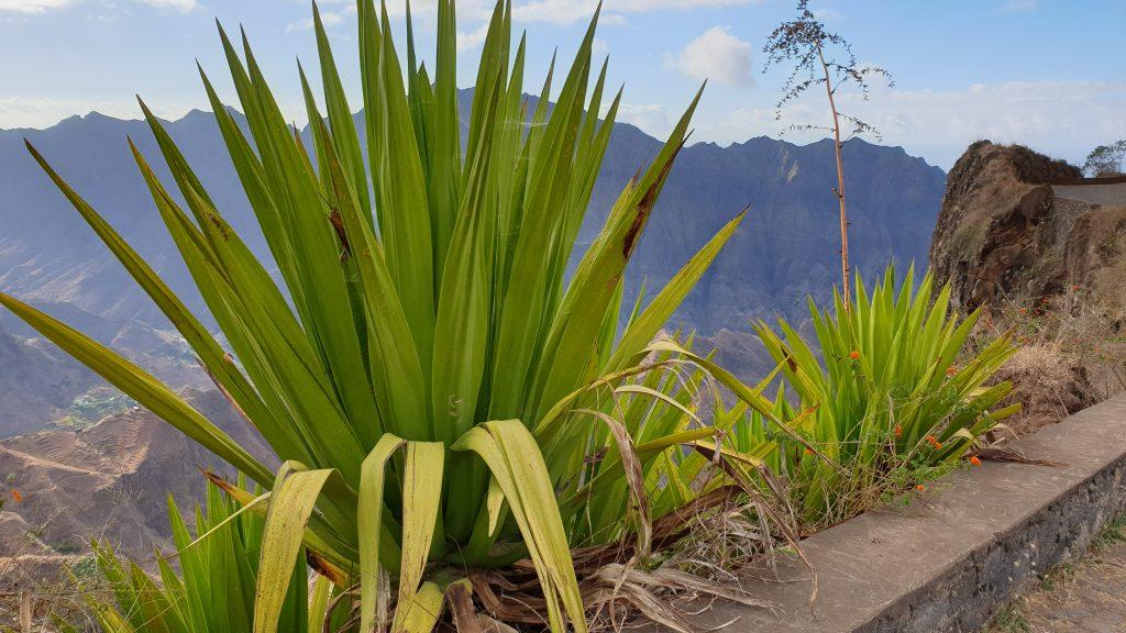 SANTO ANTAO Corda - Kapverden